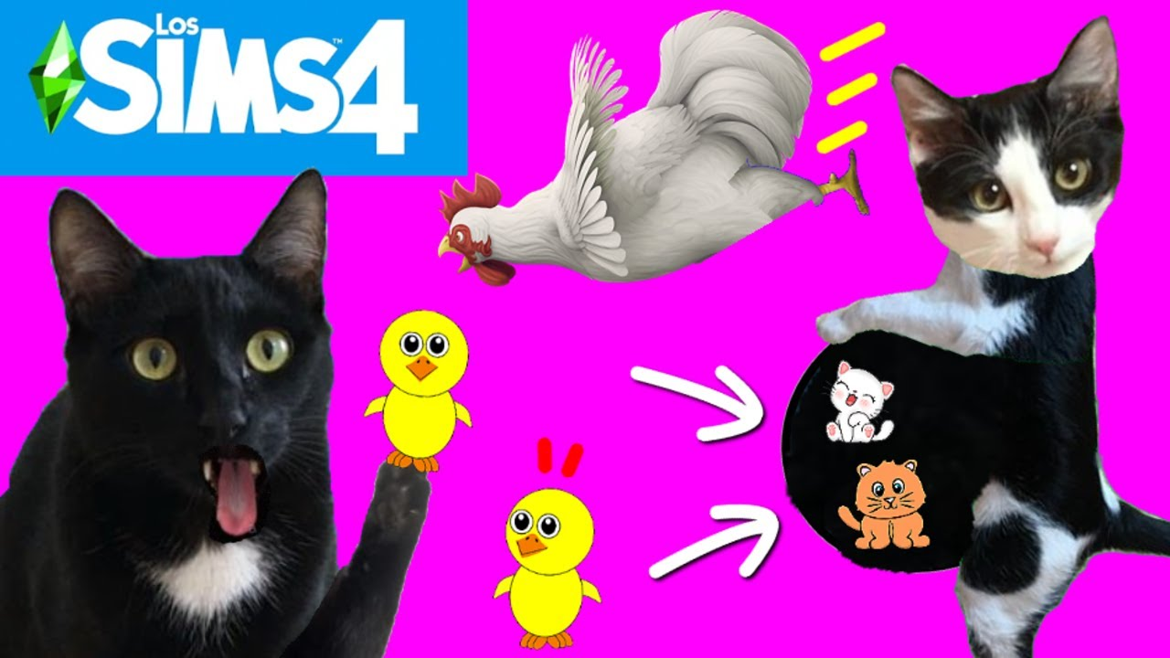 Gatos Luna y Estrella embarazada y la primera vez en la vida en el pueblo SIMS 4 / Videos de gatitos