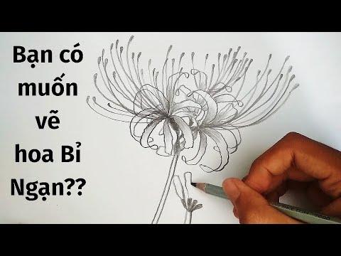 Vẽ Hoa Bỉ Ngạn bằng bút chì – How to draw Red Spider Lily