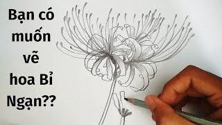Vẽ Hoa Bỉ Ngạn bằng bút chì - How to draw Red Spider Lily