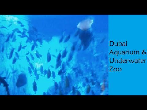 Dubai Aquarium & Underwater Zoo | Full View | Dubai Mall, United Arab Emirates