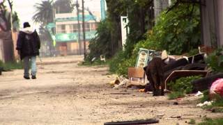 Street Dogs of South Central - Clip thumbnail