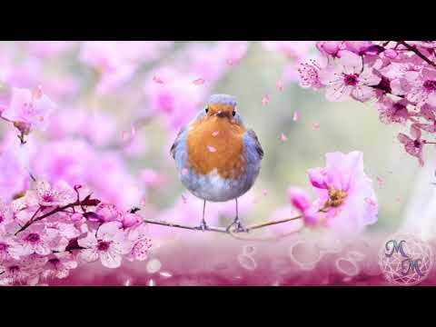 Uplifting Spring 1Hr Ambient Nature Sounds Bird Song, Bees, Frogs Inspiration Aid