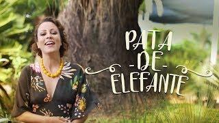 Pata-de-elefante – a mexicana pra sol forte mais fácil de cuidar