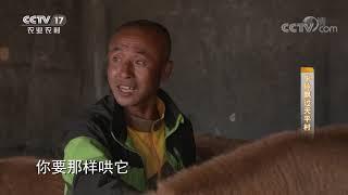 《攻坚日记》 20200730 牛铃飘过天平村|CCTV农业 - YouTube