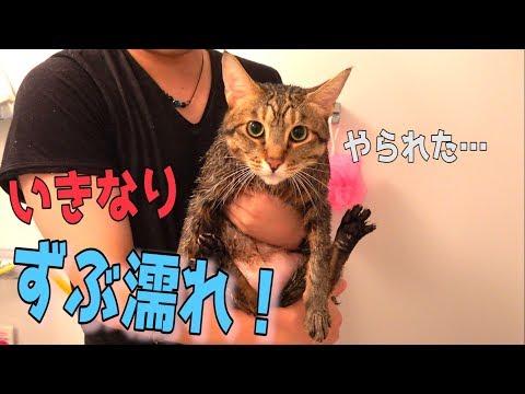 風呂場に来た猫をそのまま捕まえて水攻めしてみたwww