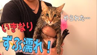 猫洗い始めました ご視聴ありがとうございました! ぜひチャンネル登録...
