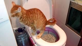 Как кота учили ходить на унитаз