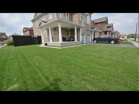 3 Iceland Poppy Trail Brampton Real Estate MLS Manish Sharma