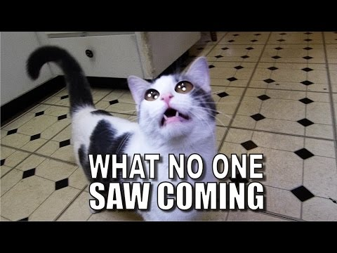 Thumbnail: Talking Kitty Cat 47 - What No One Saw Coming!