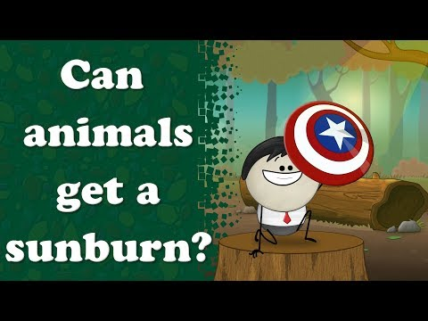 Can animals get a sunburn? | #aumsum #kids #education #science #learn