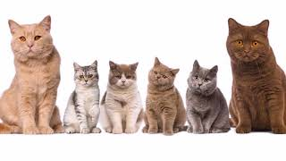 ТОП 10 умных пород кошек  Самое интересное видео о кошках