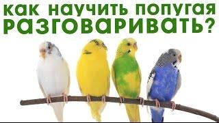 Как научить попугая говорить.  Волнистый, Какаду, Жако.
