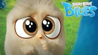 Angry Birds Blues | The Science of Cuteness #Hatchlings