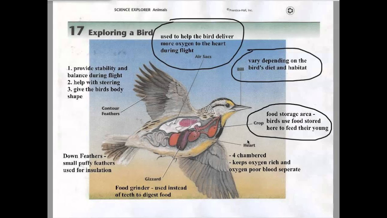 Bird Adaptations - YouTube