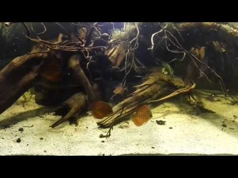 Amazonian Fish Tanks - Best South American Biotope Aquariums