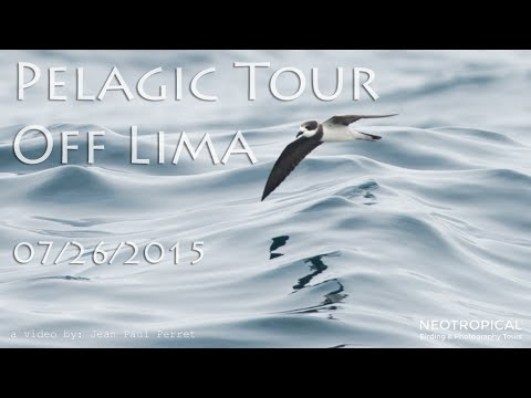 Pelagic Tour off Lima 07/26/2015