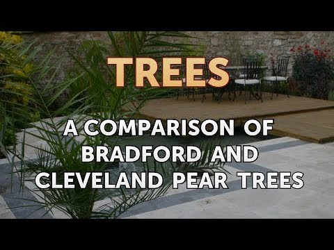 A Comparison Of Bradford And Cleveland Pear Trees Youtube