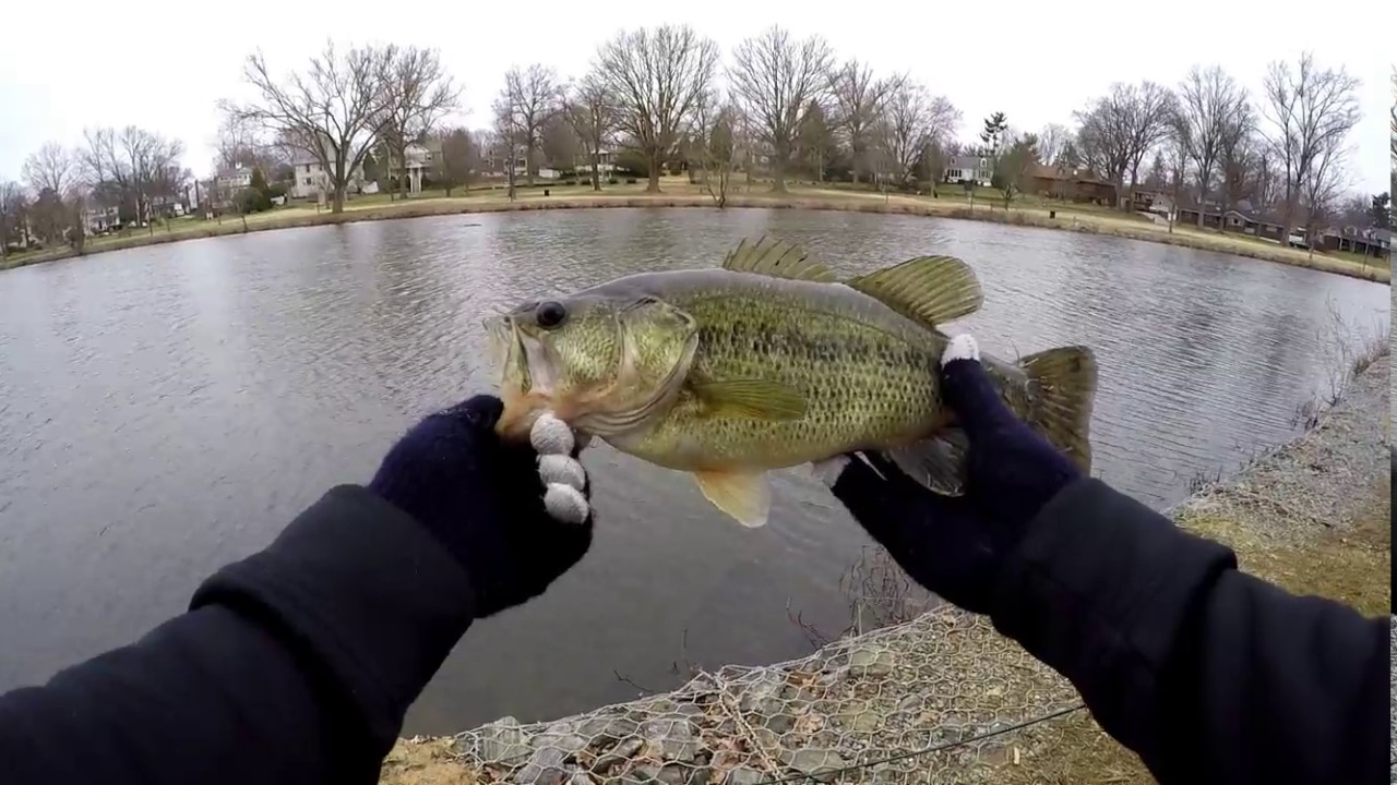 Bass fishing in early spring fishing with chatter for Spring bass fishing