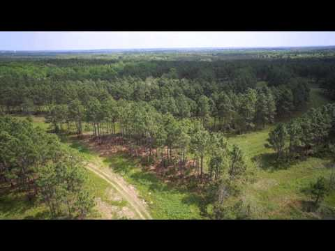 Jumpie Run Plantation - 2,763 +/- Acres Of Mixed Use,Timber Production And Hunting Land FOR SALE