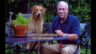 Conditioning to the Electric Collar for All Breeds with Bill Hillmann (1)