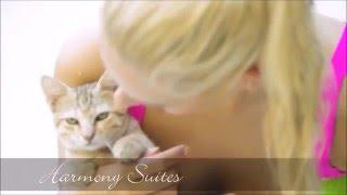Harmony Suites - Animals - Лучший комплекс в Болгарии. Недвижимость напрямую от застройщика.(, 2014-11-26T08:41:38.000Z)