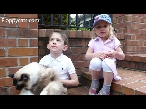 Ragdoll Cats and Kids: Q&A with Kids Marshall and Lucy about Ragdoll Cats - Floppycats