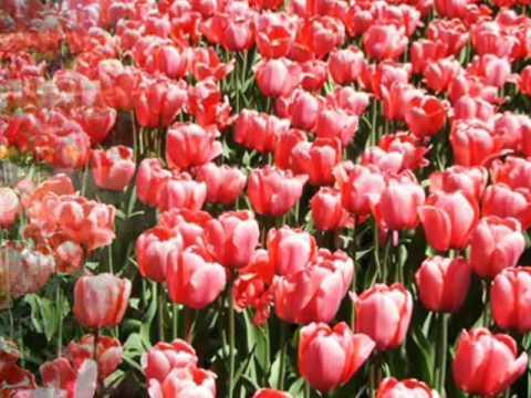 primavera di vivaldi