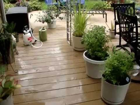 WISCONSIN GARDENING in CONTAINERS Bringing indoors for the LONG Winter