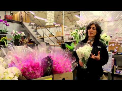 Orna's World Video #2 - Behind-the-Scenes at the San Francisco Flower Market