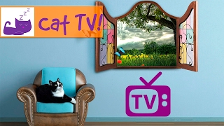 Tv For Cats Combined with Soothing Music for Cats - Engaging Visuals for Cats - Bird Watching thumbnail