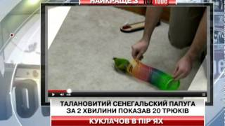 Талановитий сенегальский папуга за 2 хвилин...
