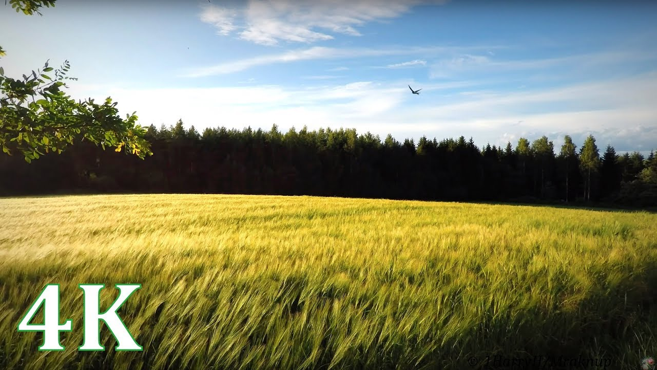 4k field with wind swallows windchimes happy summer moments no