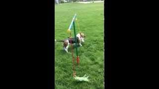 New Dog Toy for Dog's to TUG! Demo Video
