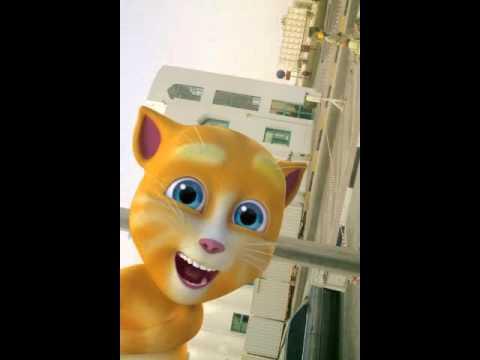 Gadwali video talking ginger