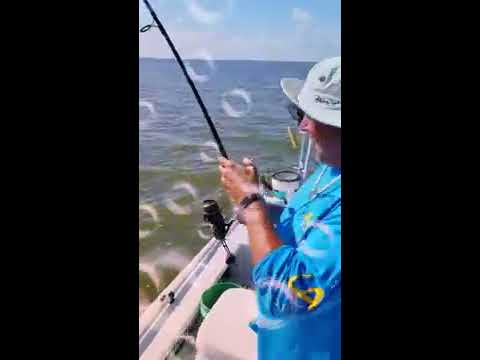 Bull redfish Mosquito Lagoon Tug of War Charters September 17, 2018