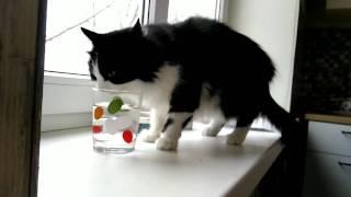 Кошка пьёт воду из стакана 😍