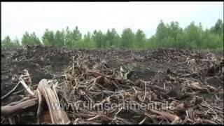 Global Ideas - Nachhaltigkeit weltweit: WEIßRUSSLAND -- NEUE MOORE (DVD / Vorschau)
