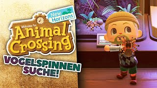 SUCHE nach der VOGELSPINNE 🏝 11 • Let's Play ANIMAL CROSSING NEW HORIZONS