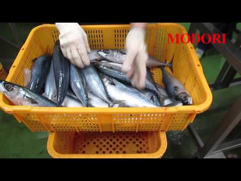 Filleting Machine (for Mackerel Or Other Medium Size Of Fishes), 필렛트기 (중형어류)