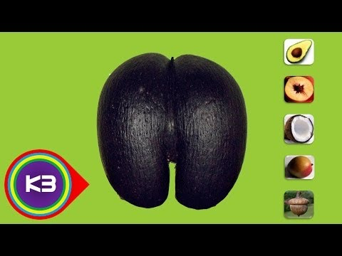 7 Largest Seeds in the World