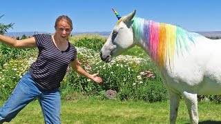 Swimmers and Unicorns In Real Life!