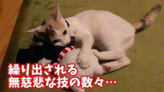 先輩猫をフルボッコにする後輩子猫