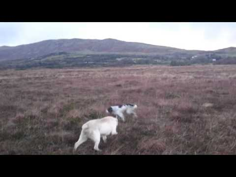Snipe hunting MAYO IRELAND