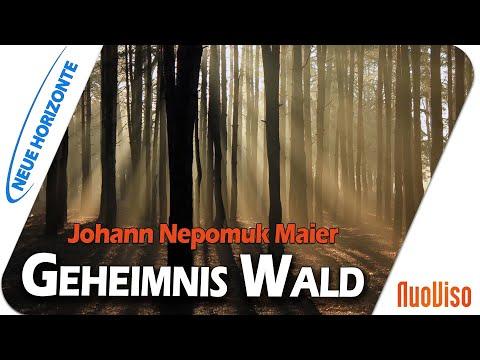 Geheimnis Wald - Johann Nepomuk Maier