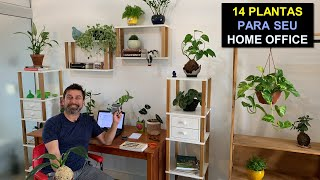 14 Plantas Para seu Home Office