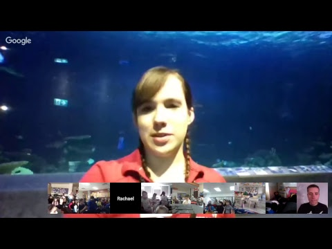 Ocean Wise at the Vancouver Aquarium | Sharks: Introducing Jaws