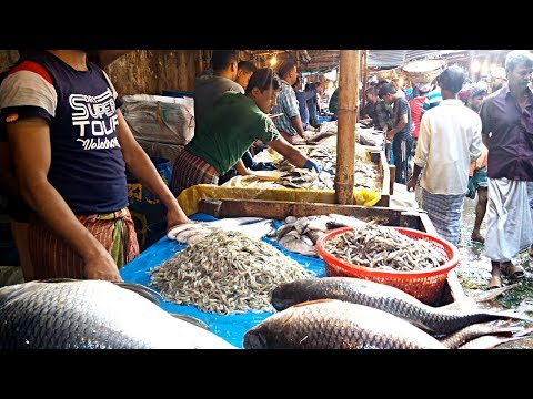 Biggest Fish Market (Wholesale Market) Kawran Bazar Dhaka BD  Available Fresh Morning Fish Market