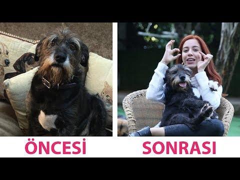 4 Hayvan 4 Mucize (Kurtarılmış Köpekler)
