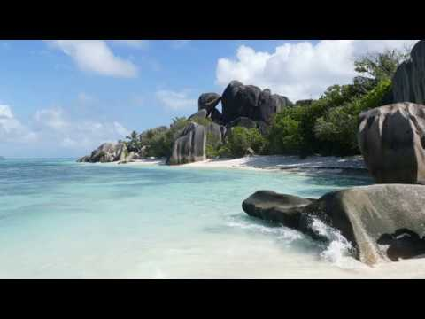 Seabirds ambience, relaxing nature sounds