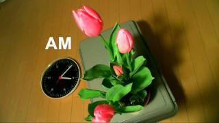 Webカメラ(マイクロソフト LifeCam Studio)+ 監視カメラ用HDD(WD Pu...